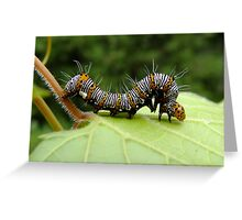 The Hungry Little Caterpillar  Greeting Card