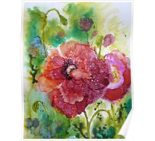 Alcohol Poppies Poster