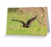 Jackal Buzzard, Jnr Greeting Card