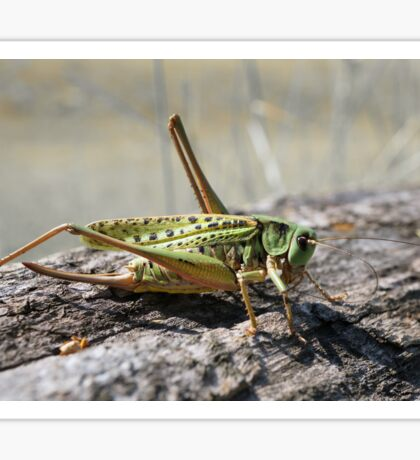 Grasshopper Sticker