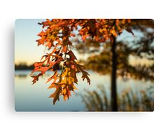 Sunny Autumn Colors on the Shore - the Changing Oak Tree Canvas Print