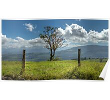 A fence and a tree, 3552HDR color Poster