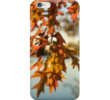 Sunny Autumn Colors on the Shore - the Changing Oak Tree iPhone Case/Skin