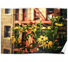 High Line Flowers - New York City Poster