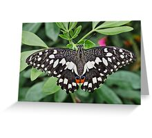 Lime Butterfly Greeting Card
