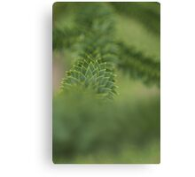 Monkey Puzzle Canvas Print