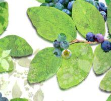 Blueberries from Nova Scotia Sticker