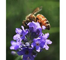 """"""" Will You Be My Honey ?"""" Photographic Print"""
