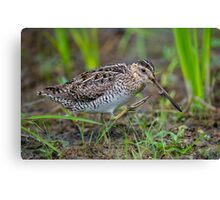 Successful Snipe Hunt Canvas Print