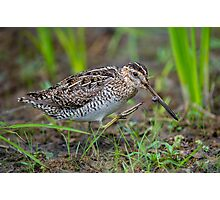 Successful Snipe Hunt Photographic Print