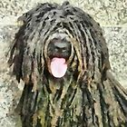 A Puli Named Marley by doggylips