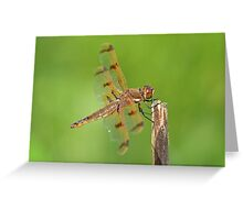 Painted Skimmer Greeting Card