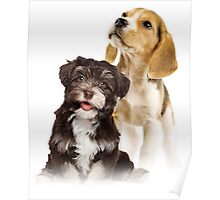 cute puppies  Poster