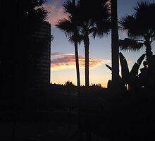 Beach Palm Tree Photo by taylahmc22