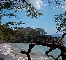 Maui Shoreline  by ejlinkphoto