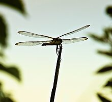 Dragonfly Resting Place by Sharon Woerner