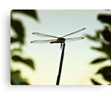Dragonfly Resting Place Canvas Print