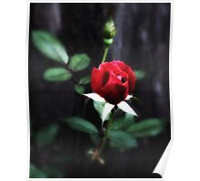 With Love Red Rose Poster