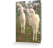Three Tender Lambs and Five Pieces of Mutton Greeting Card
