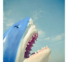 Shark Photographic Print