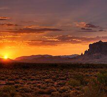 A Bit of Desert Beauty  by Saija  Lehtonen