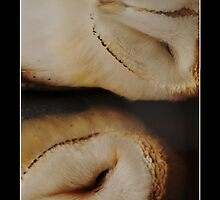 Barn Owls Snuggling iPhone case by Roger Hall