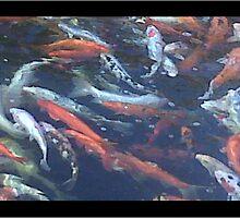 A fishy photo by pigswillnvrfly
