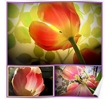 tulips tulips Poster