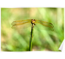 Dragonfly with his mouth wide open Poster