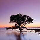 Winter Morning Sunrise - Cleveland Qld Australia by Beth  Wode