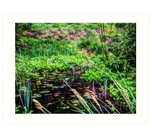 Lily pond Devon Art Print