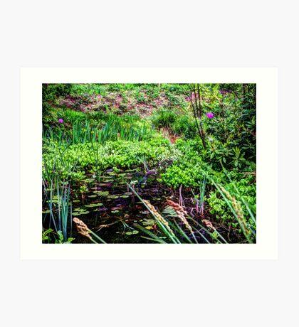 Lily pond Devon Art Print