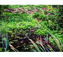 Lily pond Devon Photographic Print