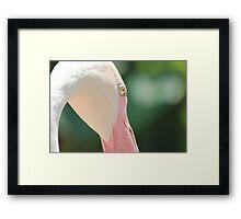 Blushing Flamingo Framed Print