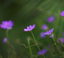 Flowers amongst the Grass by Photokes