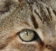 Tabby Cat Portrait Sticker