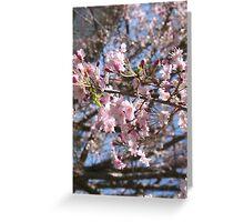 Weeping Cherry, Lake Junaluska, North Carolina Greeting Card
