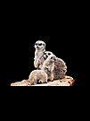 Meerkats by Lissywitch