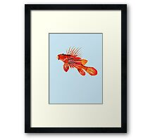 Lionfish Isolated Framed Print
