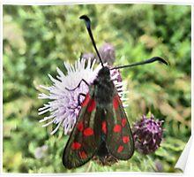 The Burnet Moth. Poster
