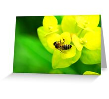 Bee on Yellow Plant Greeting Card