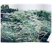 Grass in the Wind Poster