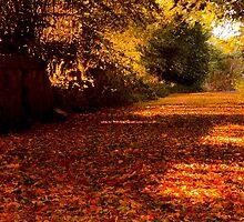 Autumns Carpet by Chris Clark
