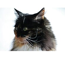Our Lily, Scaredy Cat Photographic Print