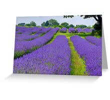 Mayfield Lavender Fields 1 Greeting Card