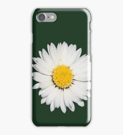 Closeup of a Beautiful Yellow and White Daisy flower Isolated iPhone Case/Skin