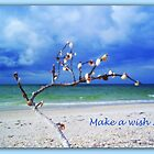 Make a Wish by Carla Barone