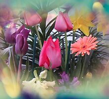 Tulips by MotherNature