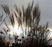 Storm Grass by Rod Raglin