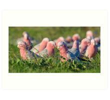 Flock of Galahs Art Print